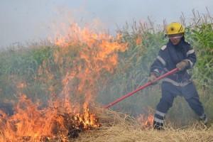 incendiu miristi vegetatie